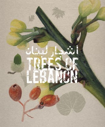Picture of Trees of Lebanon
